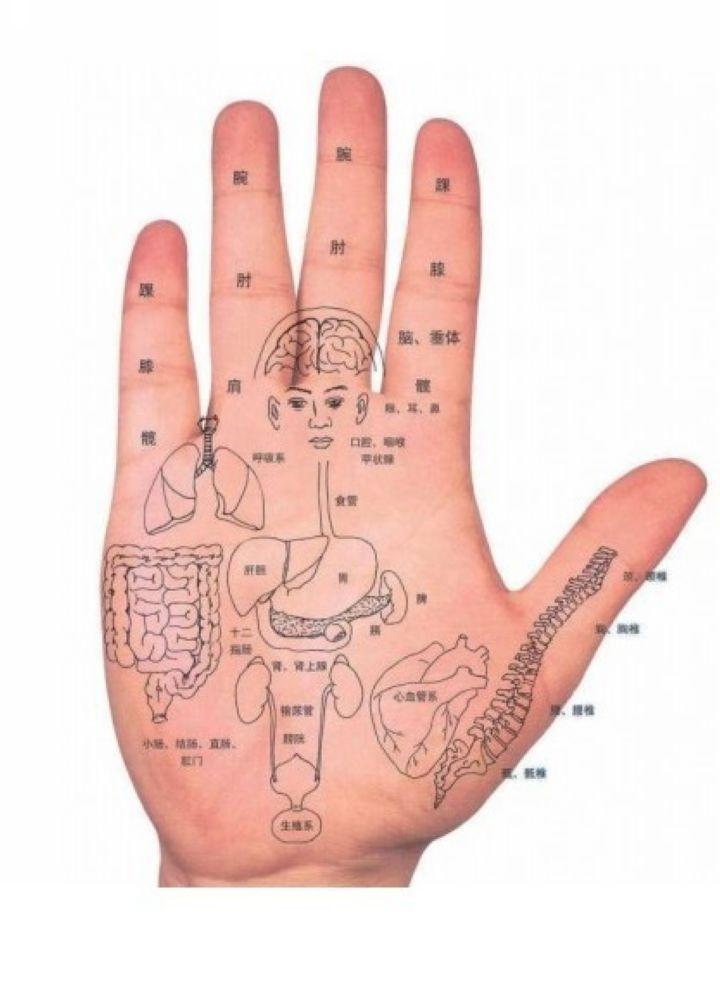 以下给大家看看面诊图和手诊图